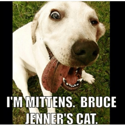 Lmmittens Bruce Jenners Cat Meme On Meme