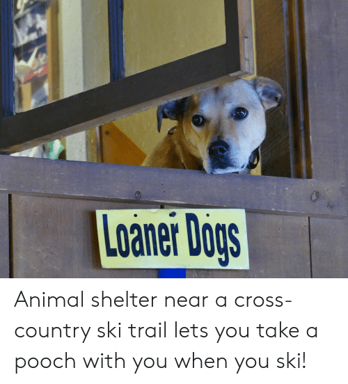 Loaner Dogs Animal Shelter Near a Cross-Country Ski Trail Lets You