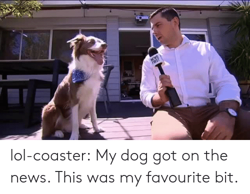 Lol, News, and Tumblr: lol-coaster:  My dog got on the news. This was my favourite bit.