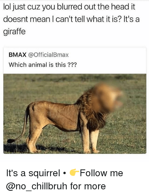 Funny, Head, and Lol: lol just cuz you blurred out the head it  doesnt mean I can't tell what it is? It's a  giraffe  BMAX @OfficialBmax  Which animal is this ??? It's a squirrel • 👉Follow me @no_chillbruh for more