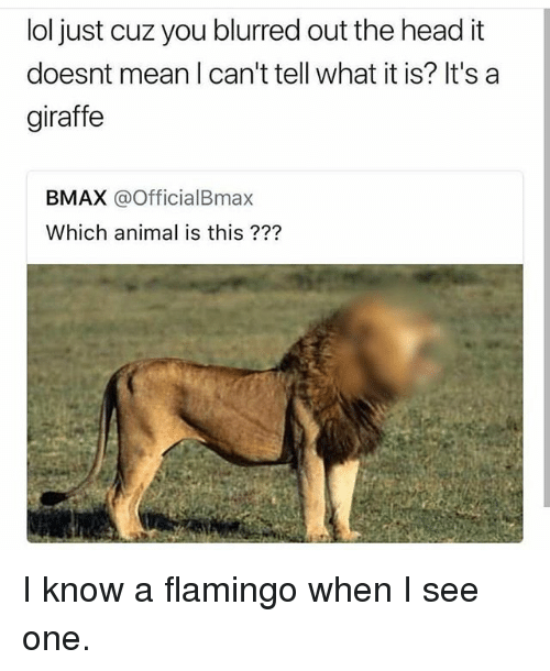 Head, Lol, and Animal: lol just cuz you blurred out the head it  doesnt mean I can't tell what it is? It's a  giraffe  BMAX @OfficialBmax  Which animal is this ??? I know a flamingo when I see one.