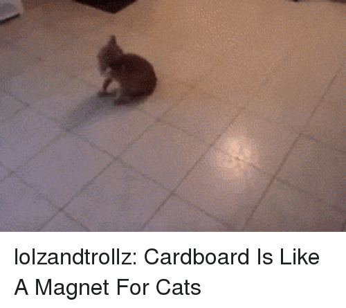 Cats, Tumblr, and Blog: lolzandtrollz:  Cardboard Is Like A Magnet For Cats