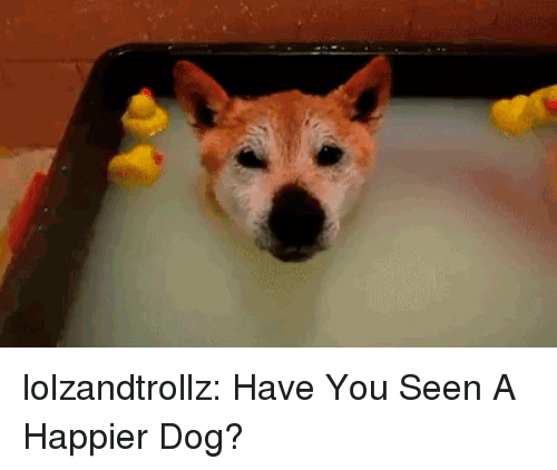 Tumblr, Blog, and Http: lolzandtrollz:  Have You Seen A Happier Dog?