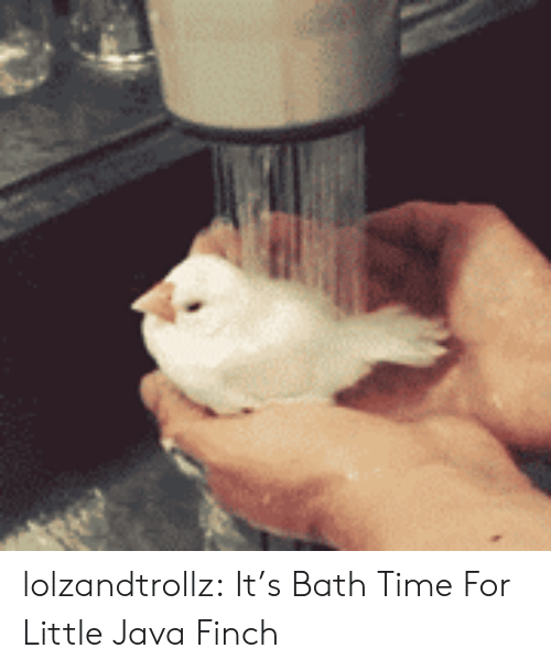 Tumblr, Blog, and Java: lolzandtrollz:  It's Bath Time For Little Java Finch