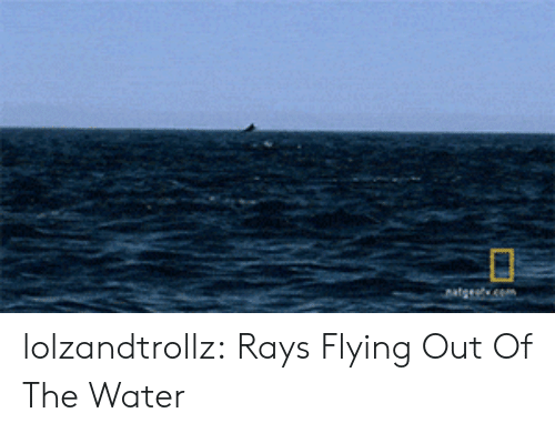 Tumblr, Blog, and Water: lolzandtrollz:  Rays Flying Out Of The Water