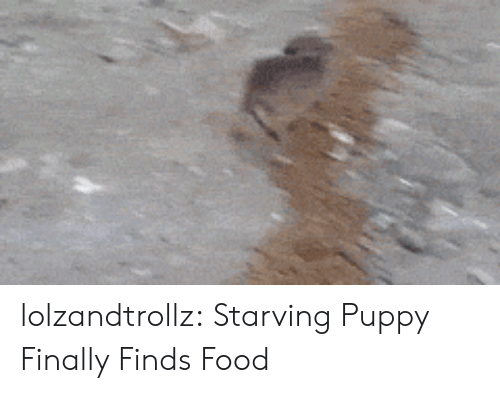 Food, Tumblr, and Blog: lolzandtrollz:  Starving Puppy Finally Finds Food