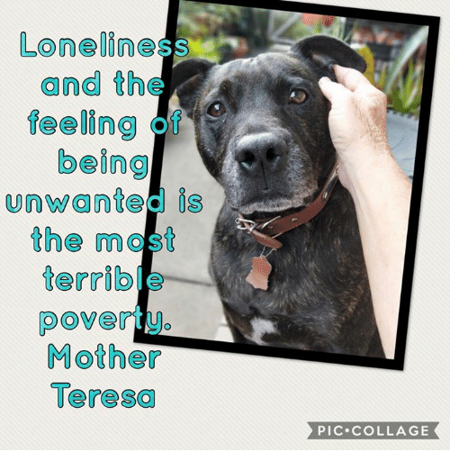 Memes, Collage, and Mother Teresa: Loneliness  and th  feeling  being  unwanted is  the most  terrible  Mother  Teresa  PIC COLLAGE