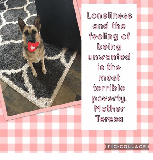 Memes, Collage, and Mother Teresa: Loneliness  and the  feeling of  being  unwanted  is the  most  terrible  poverty.  Mother  Teresa  PIC.COLLAGE