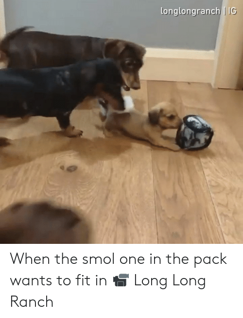 Dank, 🤖, and Fit: longlongranch IG When the smol one in the pack wants to fit in  📹 Long Long Ranch