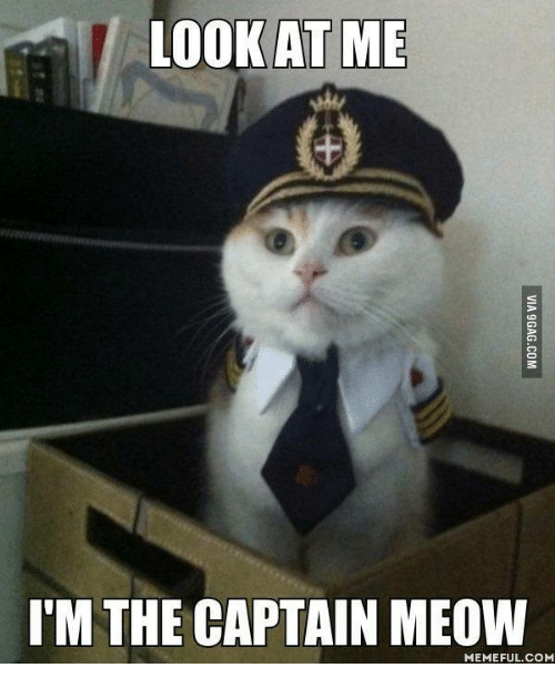 25 best memes about look at me im the captain look at