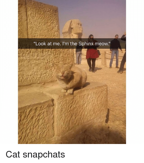 "Funny, Cat, and Sphinx: ""Look at me. I'm the Sphinx meow."" Cat snapchats"