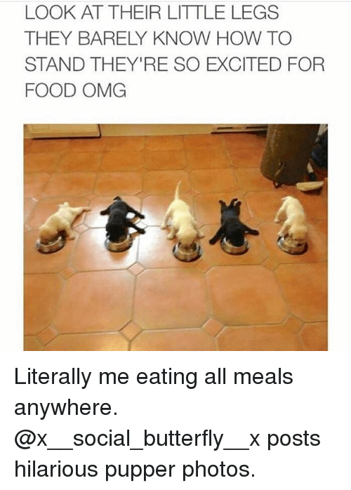 Food, Memes, and Omg: LOOK AT THEIR LITTLE LEGS  THEY BARELY KNOW HOW TO  STAND THEY'RE SO EXCITED FOR  FOOD OMG Literally me eating all meals anywhere. @x__social_butterfly__x posts hilarious pupper photos.