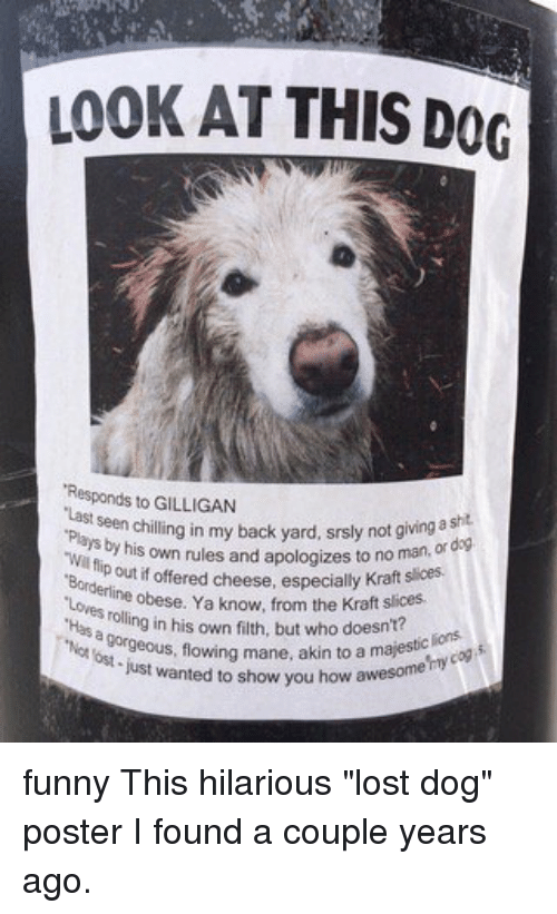 Funny, Memes, And Lost: LOOK AT THIS DOG   Lost Pet Poster