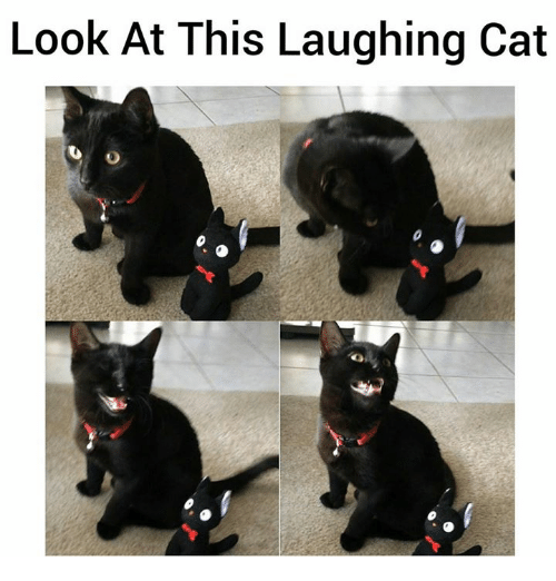 laughing black cat - photo #9