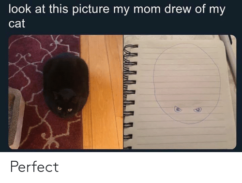 Memes, Mom, and 🤖: look at this picture my mom drew of my  cat Perfect