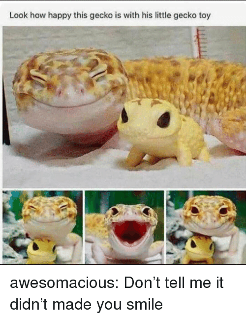 Tumblr, Blog, and Happy: Look how happy this gecko is with his little gecko toy awesomacious:  Don't tell me it didn't made you smile