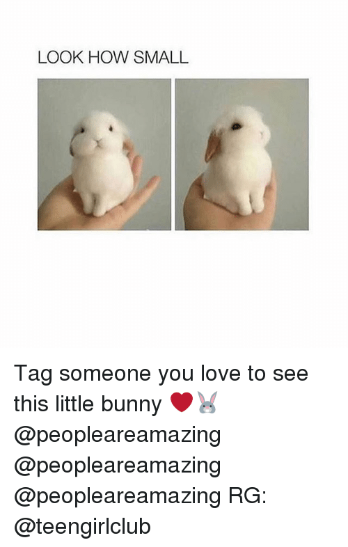 Love, Memes, and Tag Someone: LOOK HOW SMALL Tag someone you love to see this little bunny ❤️🐰 @peopleareamazing @peopleareamazing @peopleareamazing RG: @teengirlclub