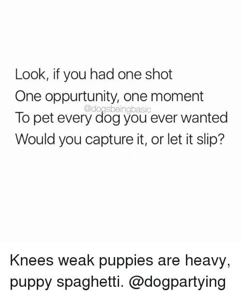Dogs, Memes, and Puppies: Look, if you had one shot  One oppurtunity, one moment  @dogs To pet every dogyou ever wanted  Would you capture it, or let it slip? Knees weak puppies are heavy, puppy spaghetti. @dogpartying