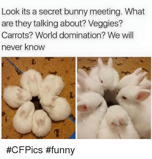 Bunnies, Memes, and 🤖: Look its a secret bunny meeting. What  are they talking about? Veggies?  Carrots? World domination? We will  never know #CFPics #funny