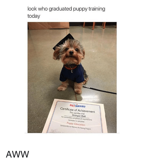 Look Who Graduated Puppy Training Today Petsmart Certificate Of