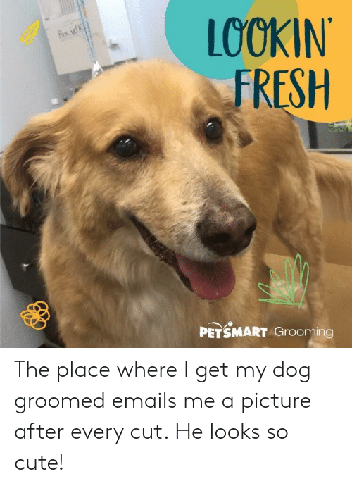 LOOKIN FRESH PETSMART Grooming the Place Where I Get My Dog