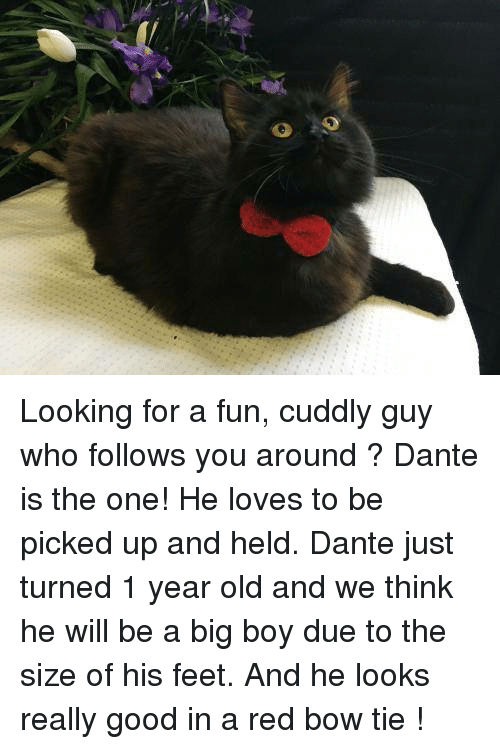 looking for a fun cuddly guy who follows you around dante is the