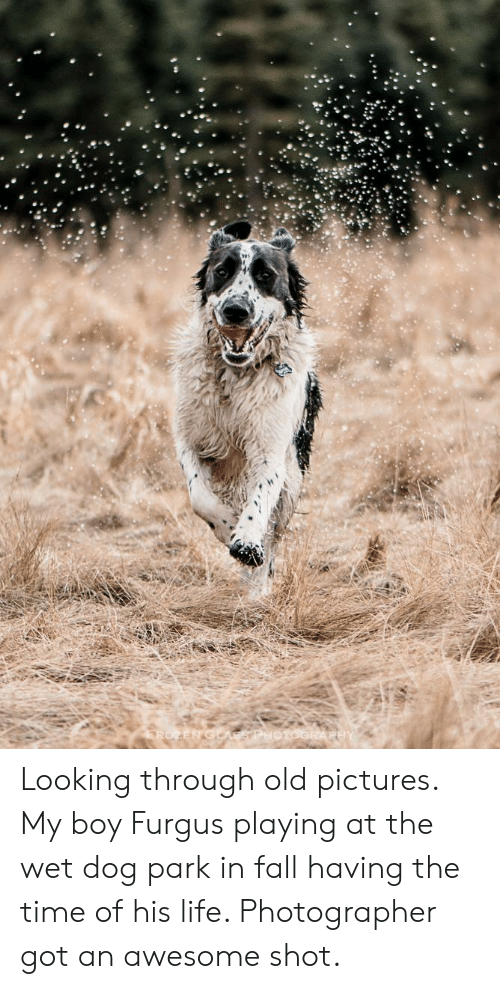 Fall, Life, and Pictures: Looking through old pictures. My boy Furgus playing at the wet dog park in fall having the time of his life. Photographer got an awesome shot.
