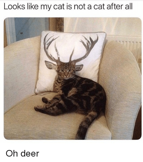Deer, Memes, and 🤖: Looks like my cat is not a cat after all Oh deer