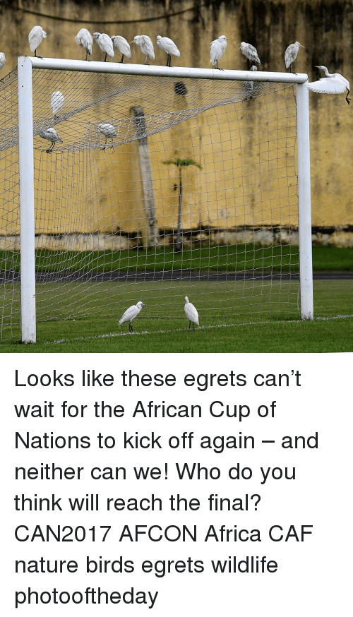 25 Best Memes About Cup Of Nations Cup Of Nations Memes