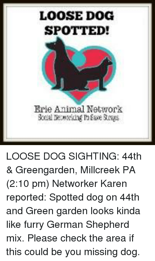 LOOSE DOG SPOTTED! Brie Animal Network LOOSE DOG SIGHTING