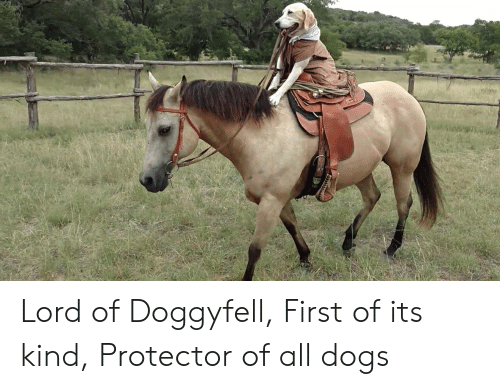 Dogs, Lord, and All: Lord of Doggyfell, First of its kind, Protector of all dogs