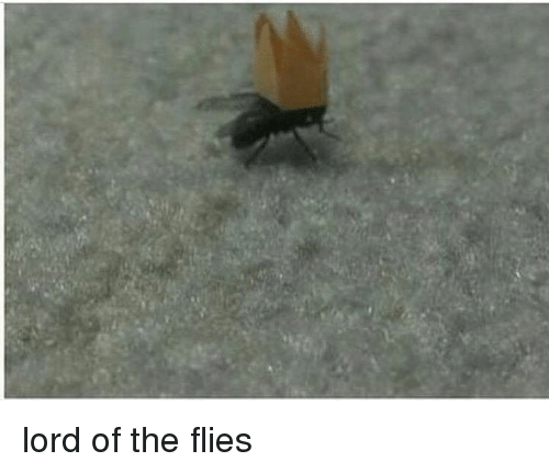 Lord of the Flies, Lord, and Lords: lord of the flies