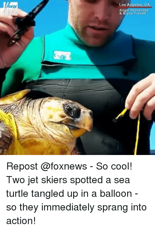 Memes, Cool, and Foxnews: Los Angeles, C  Angol Hornandoz  & Bryce Trevott Repost @foxnews - So cool! Two jet skiers spotted a sea turtle tangled up in a balloon - so they immediately sprang into action!