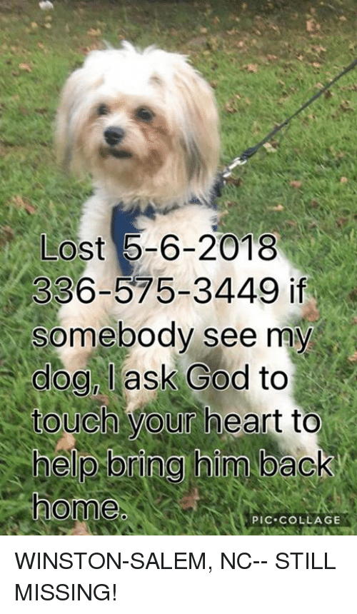 God, Memes, and Lost: LOst 5-6-2018  336-575-3449 if  somebody see my  dog, lask God to  touch your heart to  home  PIC.COLLAGE WINSTON-SALEM, NC-- STILL MISSING!