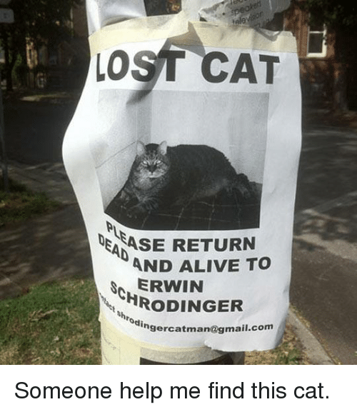 Alive, Dank, and Gmail: LOST CAT  ASE RETURN  AND ALIVE TO  ERWIN  HRoDINGER  Nhrodinger  catman  @gmail.com Someone help me find this cat.