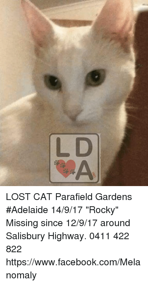LOST CAT Parafield Gardens #Adelaide 14917 Rocky Missing Since 12917