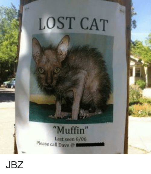 """Memes, 🤖, and Dave: LOST CAT  S  """"Muffin  Last seen 6/06  Please call Dave JBZ"""