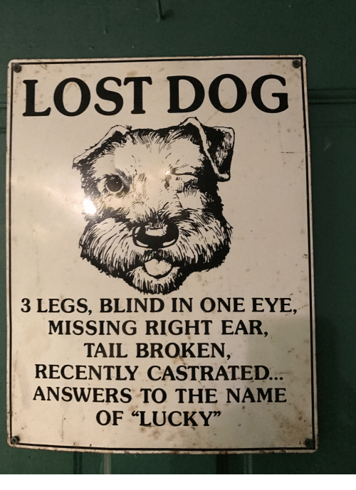Funny Lost And Answers Lost Dog  Blind In One Eye