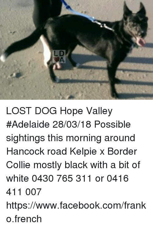 lost dog hope valley adelaide 28 03 18 possible sightings this morning 31869084 lost dog hope valley adelaide 280318 possible sightings this