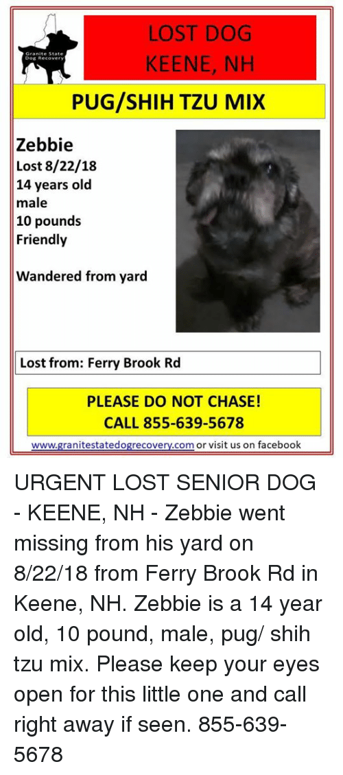 Lost Dog Keene Nh Dog Recover Pugshih Tzu Mix Zebbie Lost 82218 14