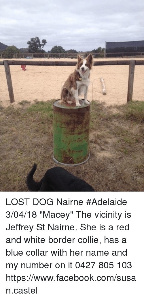 lost dog nairne adelaide 3 04 18 macey the vicinity is jeffrey 32001541 lost dog nairne adelaide 30418 macey the vicinity is jeffrey st