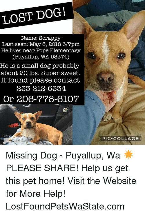 Memes, Pope Francis, and Lost: LOST DOG!  Name: Scrappy  Last seen: May 6, 2018 6/7pm  He lives near Pope Elementary  (Puyallup, WA 98374)  He is a small dog probably  about 20 lbs. Super sweet.  if found please contact  253-212-6334  Or 206-778-6l0?  PIC.COLLAGE Missing Dog - Puyallup, Wa  🌟PLEASE SHARE! Help us get this pet home!  Visit the Website for More Help! LostFoundPetsWaState.com