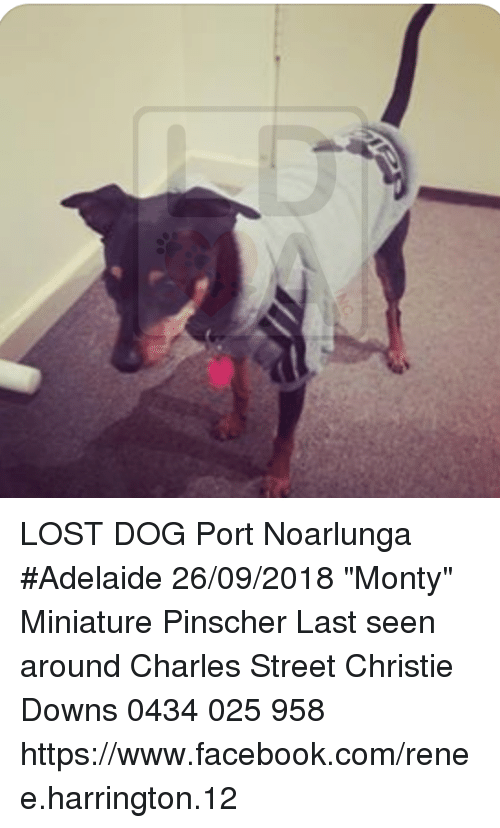 facebook memes and lost lost dog port noarlunga adelaide 2609