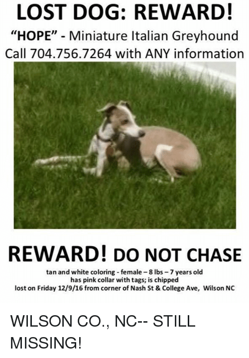 Lost Dog Reward Hope Miniature Italian Greyhound Call 7047567264