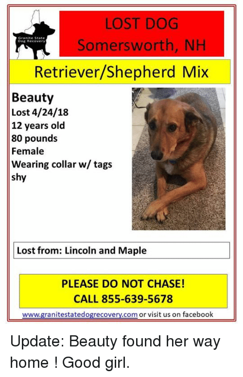 Facebook, Memes, and Lost: LOST DOG  Somersworth, NH  Dog Recover  Retriever/Shepherd Mix  Beauty  Lost 4/24/18  12 years old  80 pound:s  Female  Wearing collar w/ tags  shy  Lost from: Lincoln and Maple  PLEASE DO NOT CHASE!  CALL 855-639-5678  www.granitestatedogrecovery.com or visit us on facebook Update:  Beauty found her way home ! Good girl.