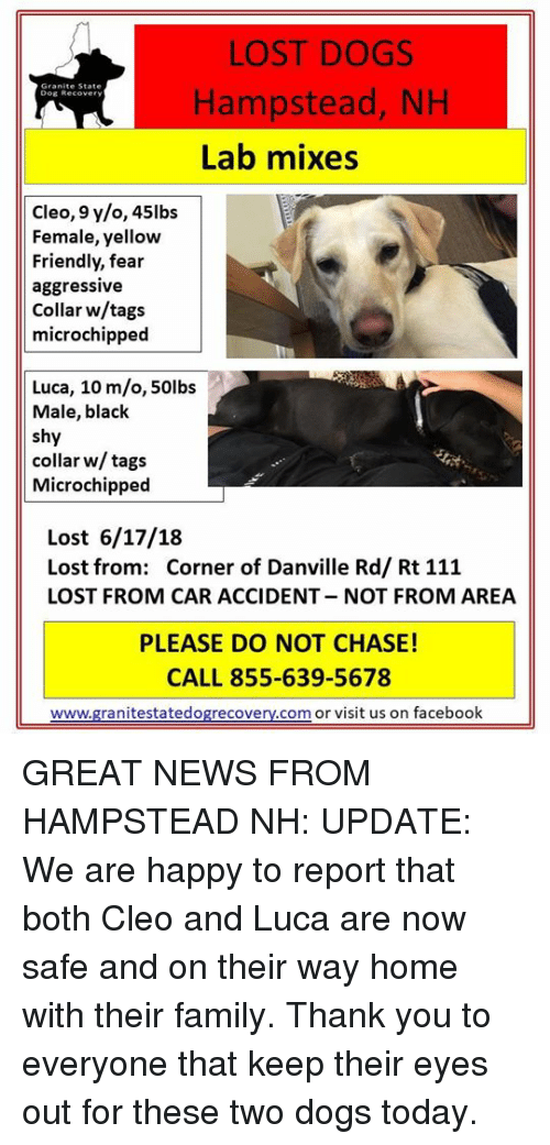 LOST DOGS Hampstead NH Lab Mixes Dog Recover Cleo 9 Yo 45lbs Female