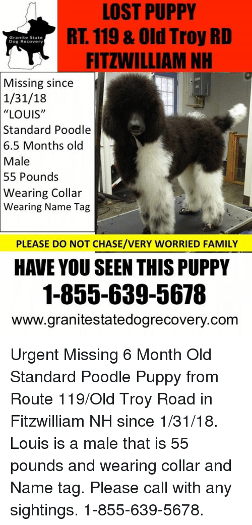 ed5764d0f4 LOST PUPPY RT 119   Old Troy RD FITZWILLIAM NH Granite State Dog ...
