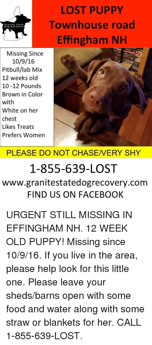 LOST PUPPY Townhouse Road Effingham NH Dog Reeovery Missing Since