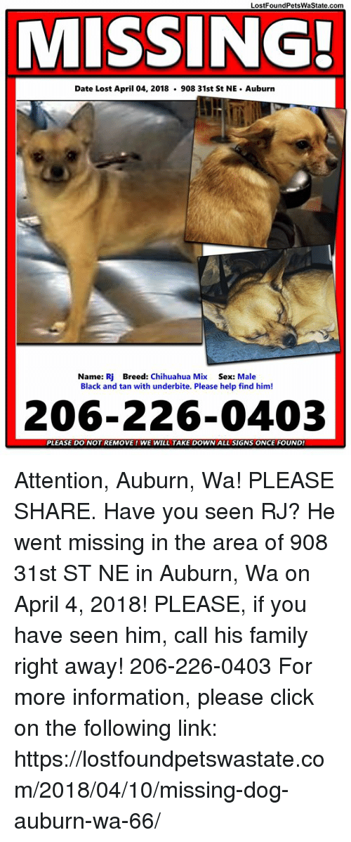 Chihuahua, Click, and Family: LostFoundPetsWaState.com MISSING! Date Lost  April 04