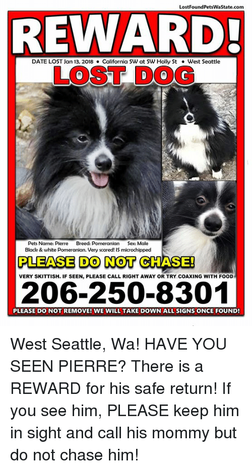 Food, Memes, and Sex: LostFoundPetsWaState.com  REWARD  DATE LOST lan 13, 2018California SW at SW Holly St.West Seattle  LOST DOG  Pets Name: Pierre Breed: Pomeranian Sex: Male  Black &white Pomeranian. Very scared! IS microchipped  PLEASE DO NOT CHASE!  VERY SKITTISH. IF SEEN, PLEASE CALL RIGHT AWAY OR TRY COAXING WITH FOOD  206-250-8301  PLEASE DO NOT REMOVE! WE WILL TAKE DOWN ALL SIGNS ONCE FOUND West Seattle, Wa! HAVE YOU SEEN PIERRE?  There is a REWARD for his safe return!  If you see him, PLEASE keep him in sight and call his mommy but do not chase him!